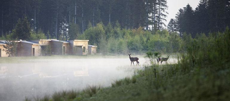 Center Parcs Les Trois Forêts natuur