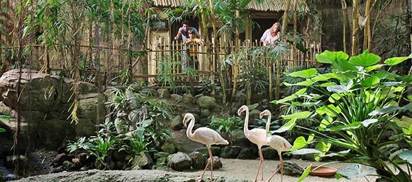 Jungle Dome Het Heijderbos