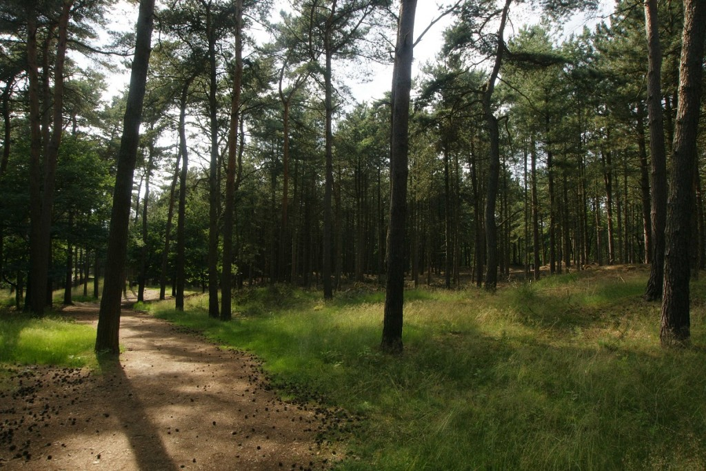 Natuur in park Molenheide