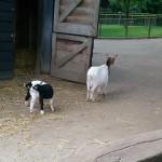 Het Heijderbos kinderboerderij dieren