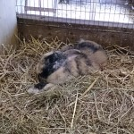 Het Heijderbos konijnen