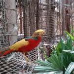 Het Heijderbos Jungle Dome paradijsvogel