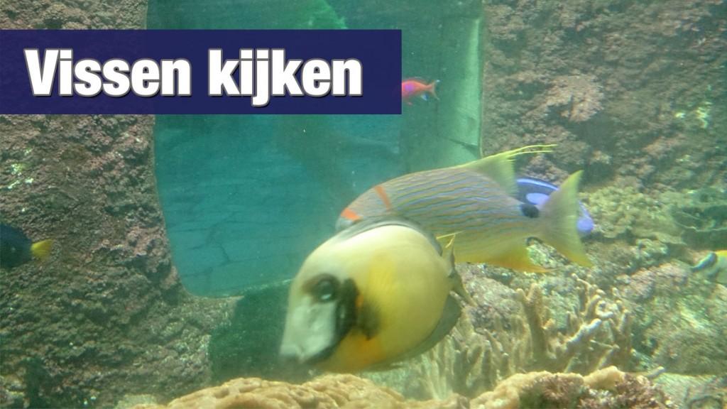 Vissen kijken in het koraalbad