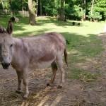 Het Heijderbos kinderboerderij ezel