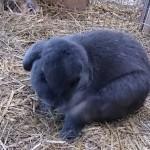 Het Heijderbos konijn