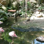 Het Heijderbos Jungle Dome flamingo
